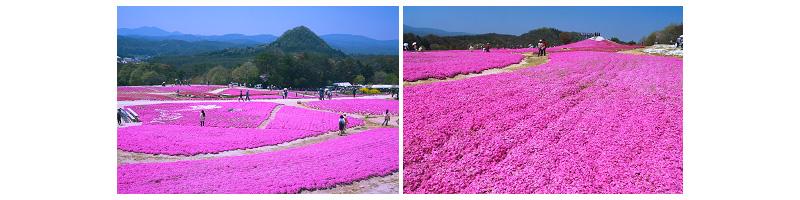 ฮิโรชิม่า – ไซโจ – สวนดอกไม้คามุโนะซาโตะรคขุตัน – คุราชิกิ - 2