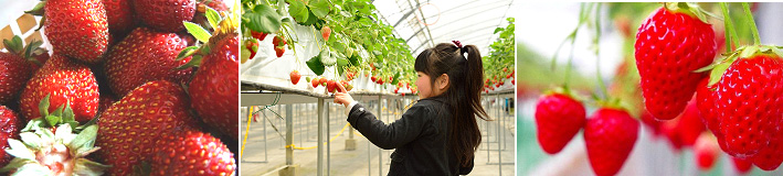 คารุยซาว่า – คารุยซาว่าการ์เด้นฟาร์ม – ชิชิบุ – ทุ่งดอกพิงค์มอส  – โตเกียว - 2