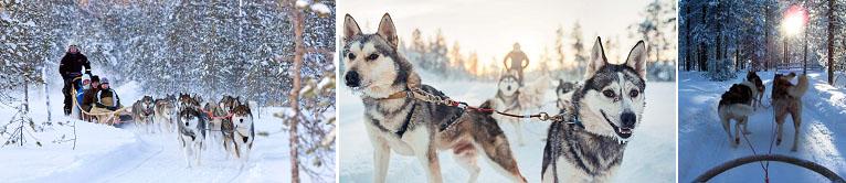 โรวาเนียมิ – ขี่รถ snowmobile – ฟาร์มสุนัขฮัสกี้ – นั่งเลื่อนสุนัขไซบีเรียนฮัสกี้ – พิพิธภัณฑ์ Arktikum - 2