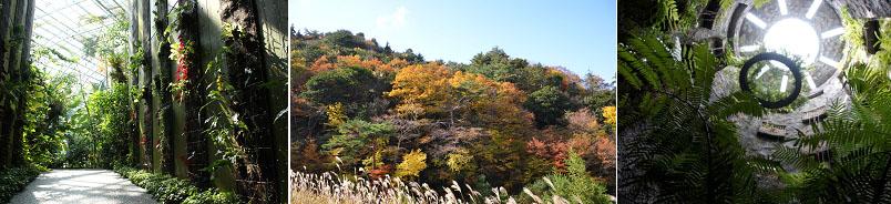 โคจิ – สวนพฤกษศาสตร์มาคิโนะ – ปราสาทโคจิ – ตลาดคุเระไทโช – ชิมันโตะ - 2
