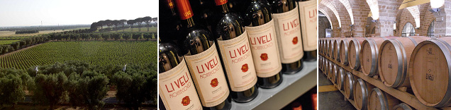 เตอเร่ คานเน่ – เลชเช – ชมเมือง – ไร่ไวน์ลิเวลี่ – ชมไร่ไวน์ – เตอเร่ คานเน่ - 2