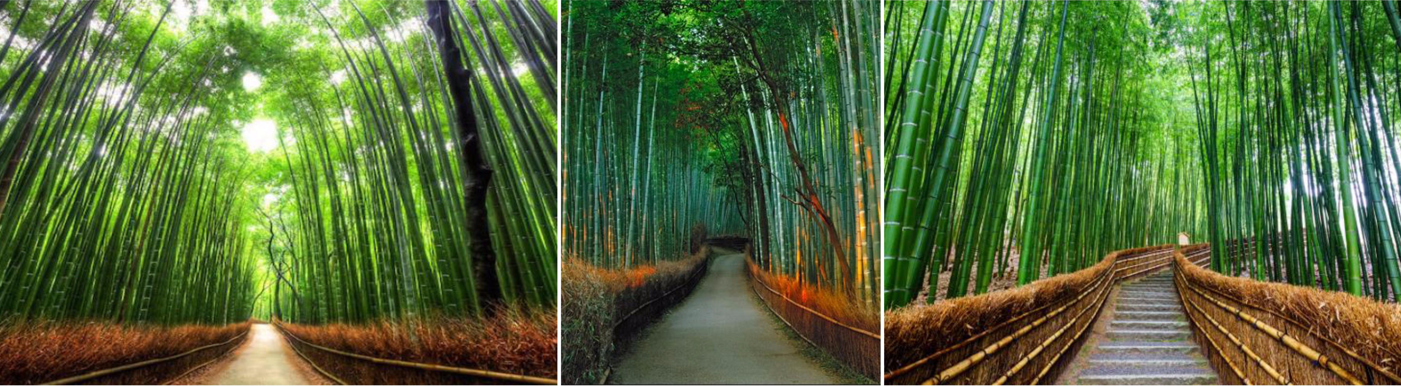 โอซาก้า – คาเมโอกะ – นั่งรถไฟสายโรแมนติก – เขาอาราชิยามะ – สะพานโทเกะซึเคียว – วัดเทนริวจิ – ป่าไผ่ – โอซาก้า - 2