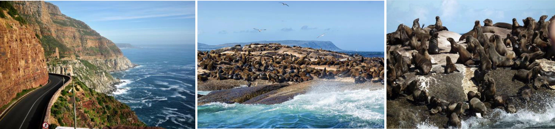 เคปทาวน์ – Hout Bay – เกาะดุยเกอร์ – เคปพอยท์ – แหลมกู๊ดโฮป – ขึ้นกระเช้าเดอะฟลายอิงดัตช์แมน –  ประภาคารเคปพอยท์ – อาณานิคมนกเพนกวินหาดโบวล์เดอร์ – เคปทาวน์ - 2