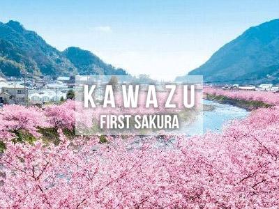 Kawazu First Sakura
