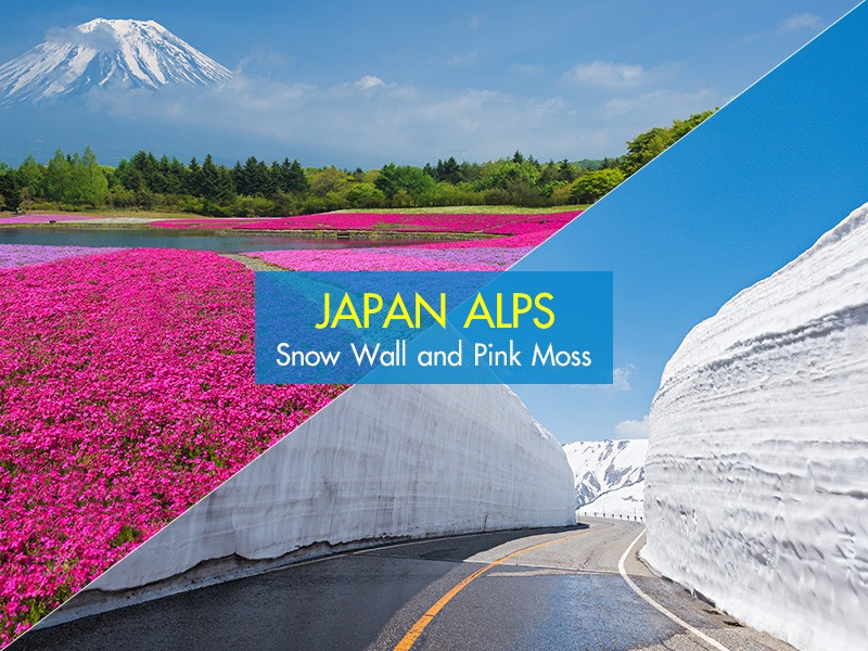 'Japan Alps Snow Wall and Pink Moss Surprise!
